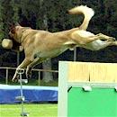 Hundesport (Foto: dpa)