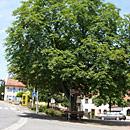 Dorfplatz von Heckendalheim