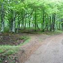 Unterwegs im Wald (Foto: Marmit)