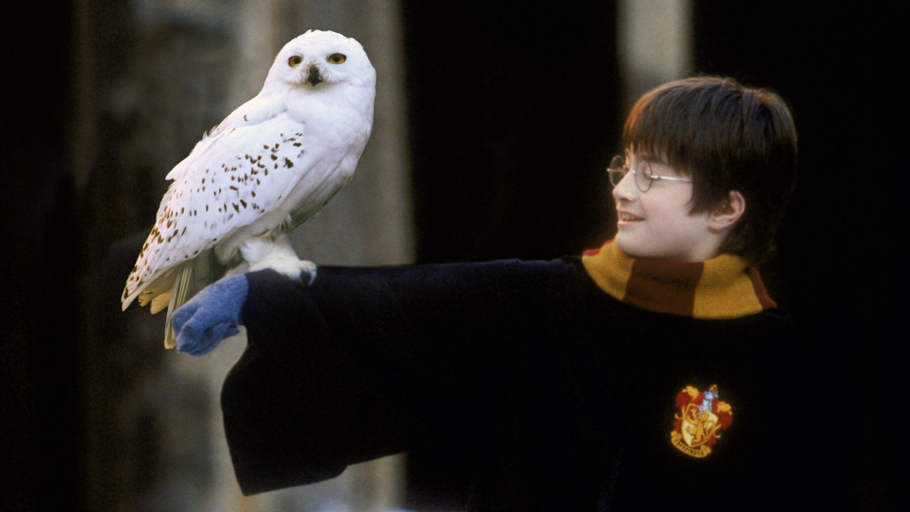 Harry Potter und seine Eule (Foto: Warner)