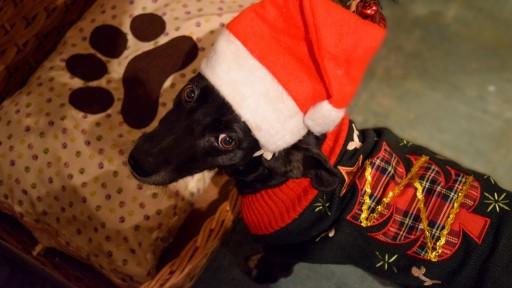 Bilder Weihnachten Tiere.Sr Mediathek De Tiere Verschenken An Weihnachten Besser Nicht