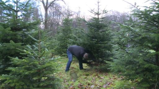 weihnachtsbaum ökologisch